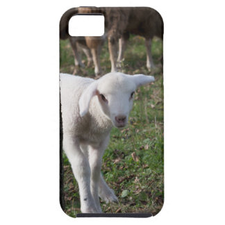 Shy lamb iPhone 5 covers