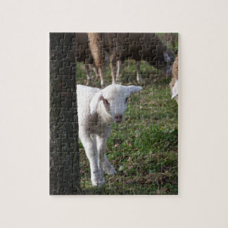 Shy lamb jigsaw puzzle