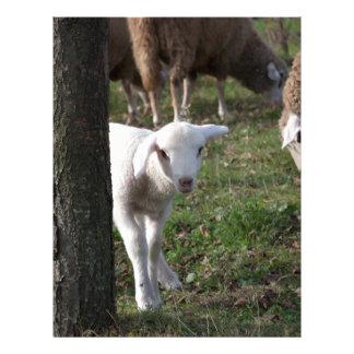 Shy lamb letterhead