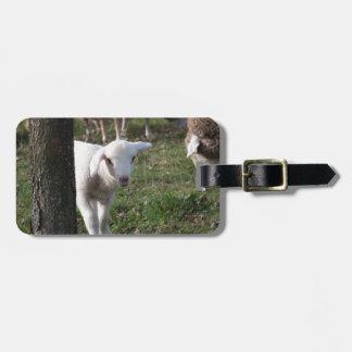 Shy lamb luggage tag