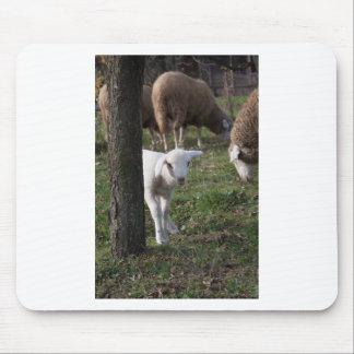 Shy lamb mouse pad