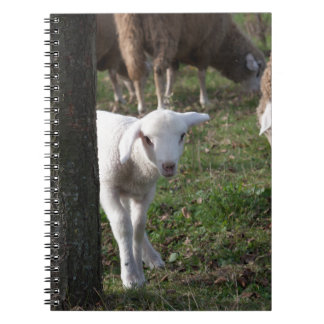 Shy lamb note book