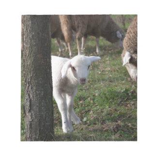 Shy lamb notepad