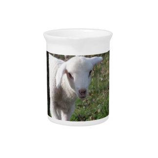 Shy lamb pitcher