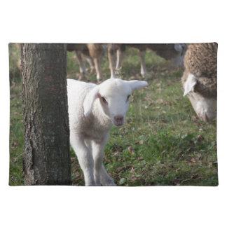 Shy lamb placemat