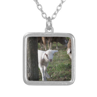 Shy lamb silver plated necklace