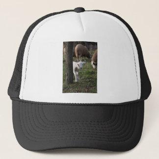 Shy lamb trucker hat