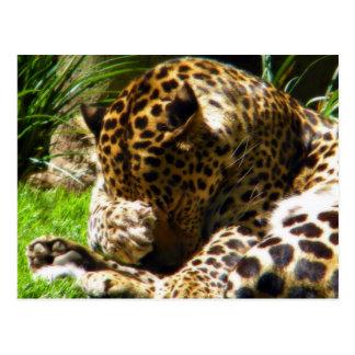 Shy Leopard Postcard