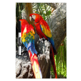 SHY PARROTS DRY ERASE BOARDS
