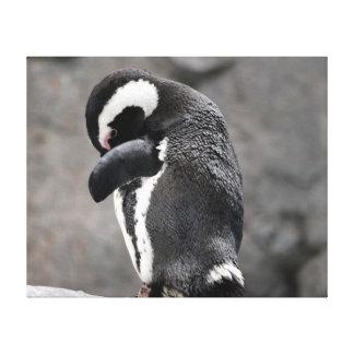 Shy Penguin Canvas Print