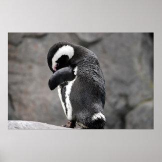 Shy Penguin Poster