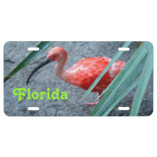 Shy Scarlet Ibis Custom License Plate