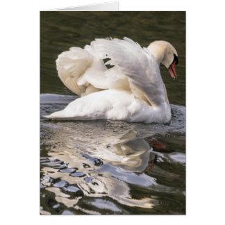 Shy Swan Card