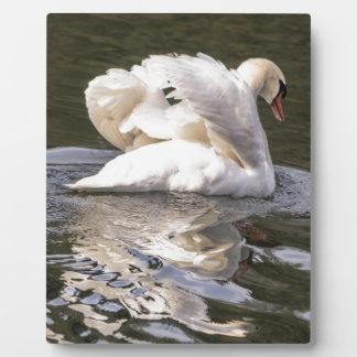 Shy Swan Plaque