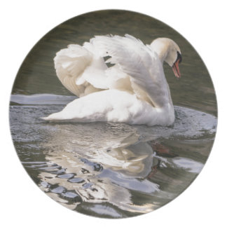 Shy Swan Plate