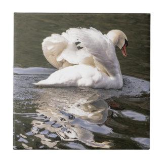 Shy Swan Tile