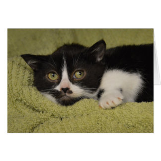 Shy Tuxedo Kitten Card