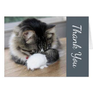 Shy Zorro Kitten Thank You Card