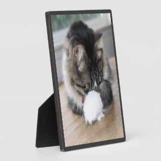 Shy Zorro Kitty Photo Plaque
