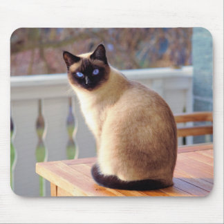 Siamese Cat, Blue Eyes Mouse Mat Mouse Pad