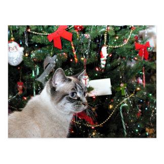 Siamese cat Christmas Postcard