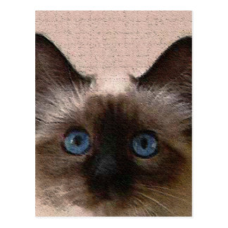 siamese cat crackle old aged cracked Hi Hello Post Cards