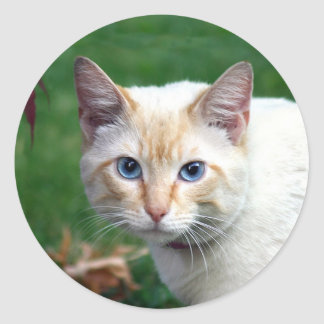 Siamese cat face sticker