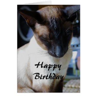 Siamese Cat Happy Birthday Card