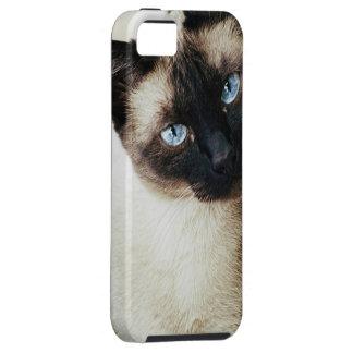 Siamese Cat iPhone 5 Covers