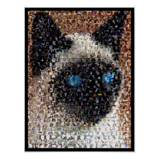 siamese Cat Montage Poster