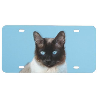 Siamese Cat Painting - Cute Original Cat Art License Plate