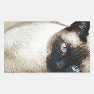 Siamese Cat Pet Purr Meow Kitty Destiny Art Sticker
