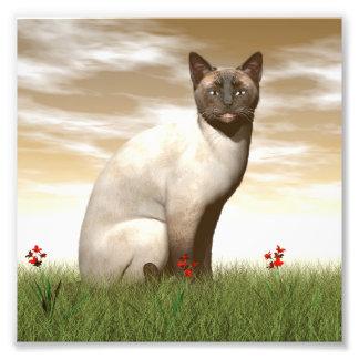 Siamese cat photo print