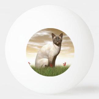 Siamese cat ping pong ball
