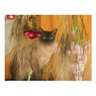 Siamese Cat Posing Animal Photography Postcard #3