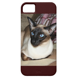 Siamese Cat Relaxing on Couch Case For The iPhone 5
