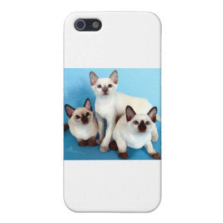 Siamese Cats iPhone 5/5S Cover