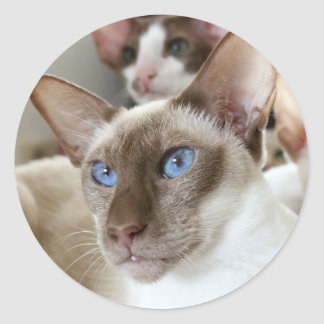 Siamese  Cats Pets Animals Round Sticker
