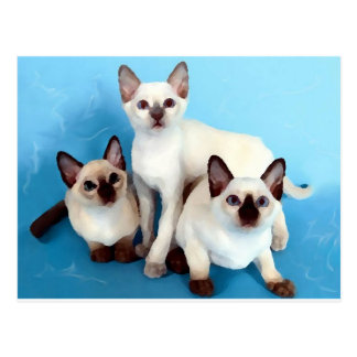 Siamese Cats Postcard