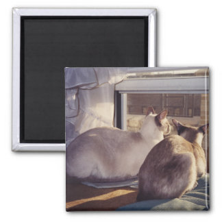 Siamese Cats Two at Window (2) Magnet