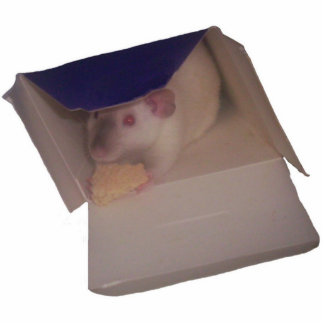 siamese dumbo rat in a box acrylic cut outs