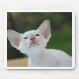 Siamese kitten mouse pad
