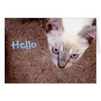 """Siamese kitten note card """"hello"""""""