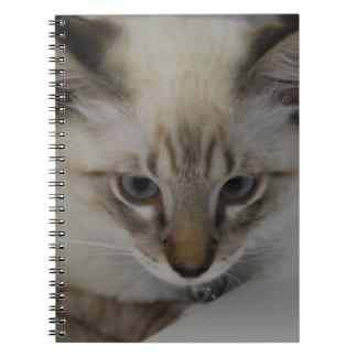 Siamese Kitten Spiral Notebook