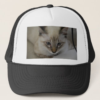 Siamese Kitten Trucker Hat