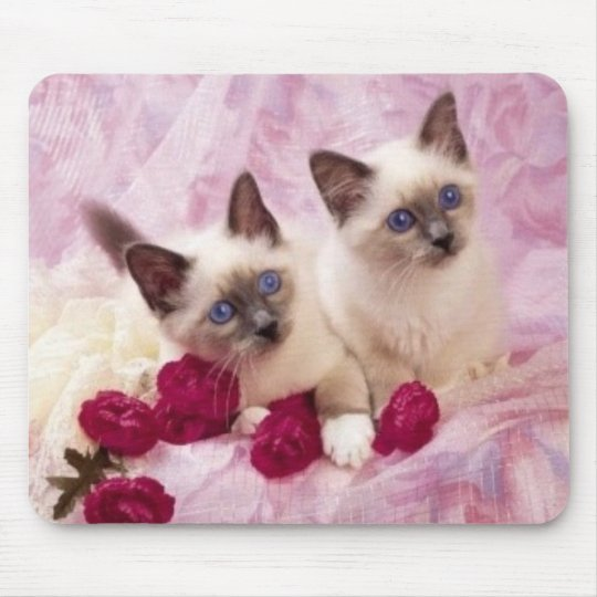siamese kittens mouse pad