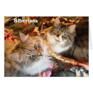 Siberian Beauties Note Cards