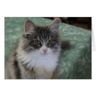 Siberian Cat Greeting Card (general purpose)