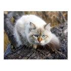 Siberian Cat In A Autumn Forest Postcard