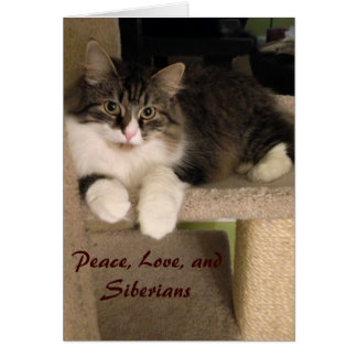 Siberian Cat Note Cards